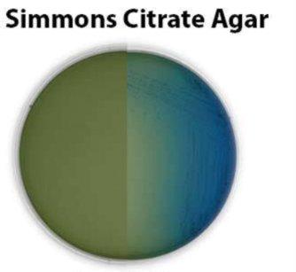 Simmons Citrate Agar