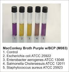MacConkey Broth