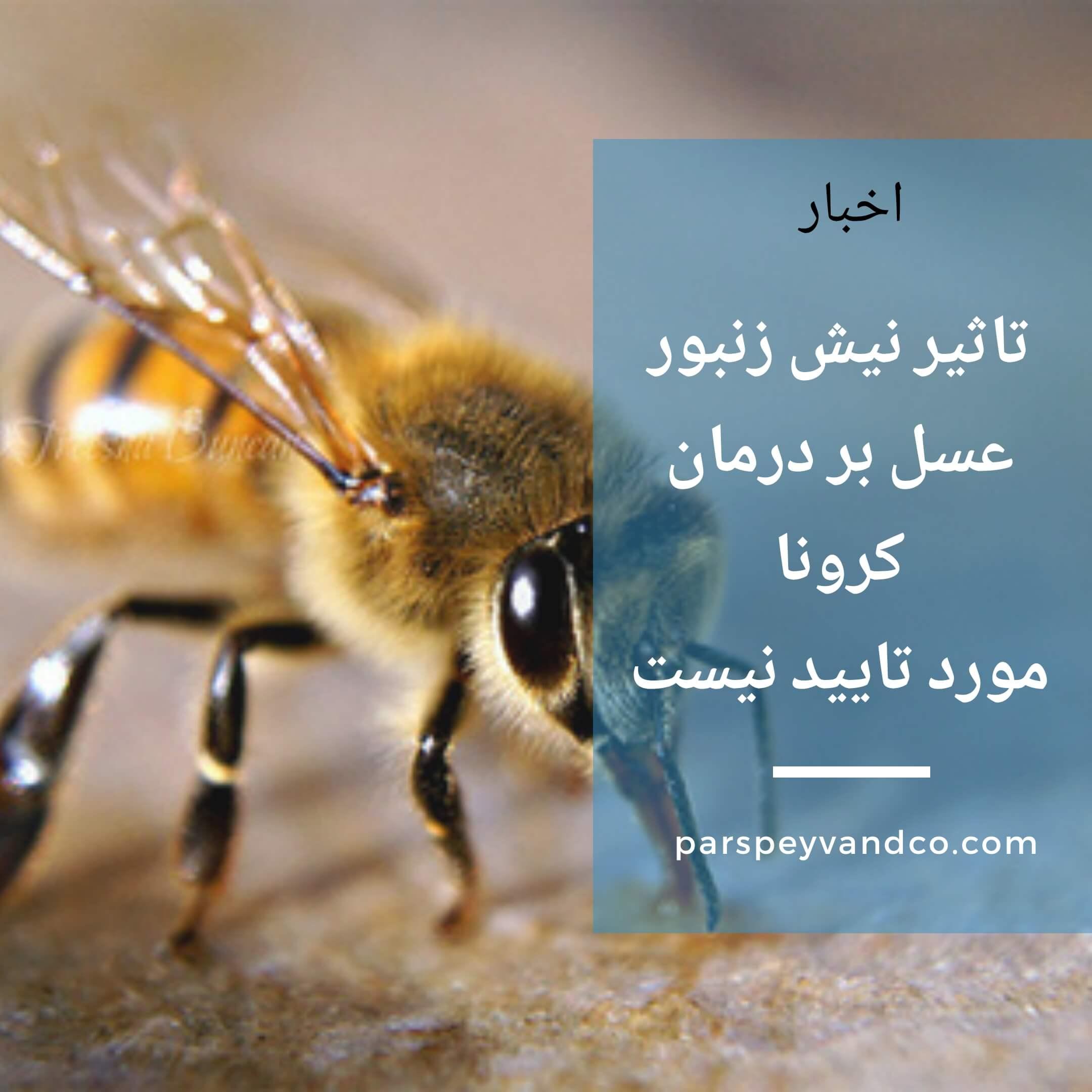 نیش زنبور در کرونا
