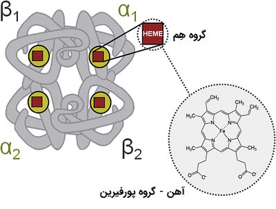 ساختار هموگلوبین